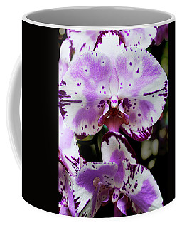 Coffee Mug featuring the photograph Purple And White Orchid by Melinda Blackman