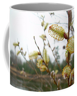 Coffee Mug featuring the photograph Pussy Willow Blossoms by Kent Lorentzen