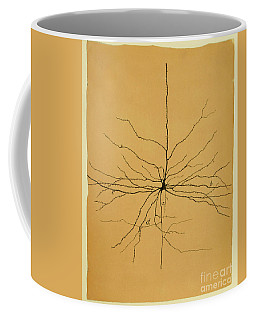 Pyramidal Cell In Cerebral Cortex, Cajal Coffee Mug by Science Source