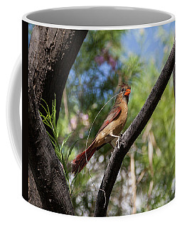 Pyrrhuloxia At Work Coffee Mug