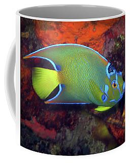 Queen Angelfish, U. S. Virgin Islands 2 Coffee Mug