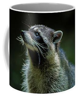 Raccoon 1 Coffee Mug