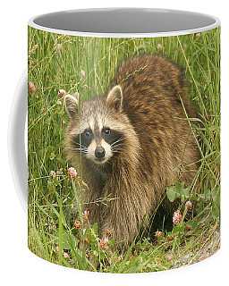 Coffee Mug featuring the photograph Raccoon  by Doris Potter