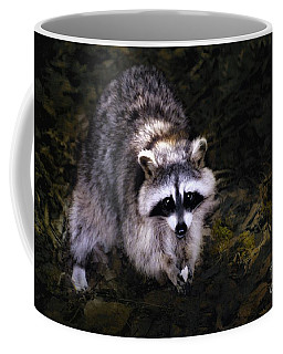 Coffee Mug featuring the photograph Raccoon  by Elaine Manley