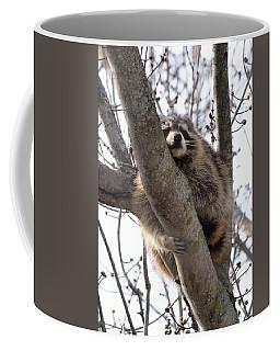Afternoon Nap-raccoon Up A Tree  Coffee Mug