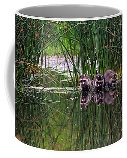 Coffee Mug featuring the photograph Raccoons by Spencer Baugh
