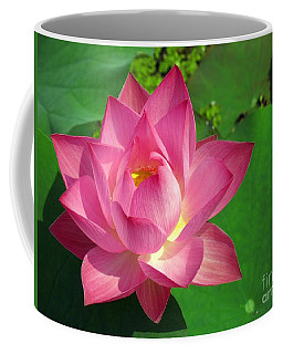 Radiant Water Lily Coffee Mug