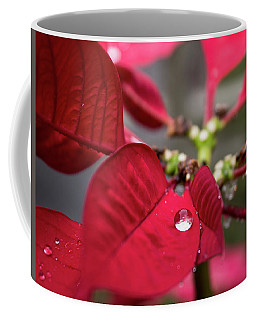 Rain Drop On A Poinsettia  Coffee Mug
