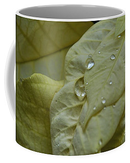 Rain Drops On A  White Poinsettia Coffee Mug