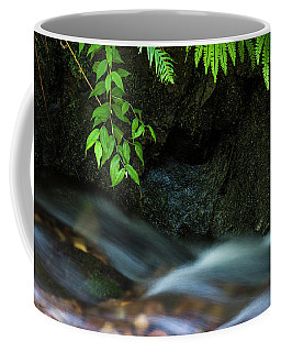 Rain Forest Stream Coffee Mug