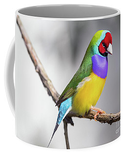 Rainbow Finch Coffee Mug