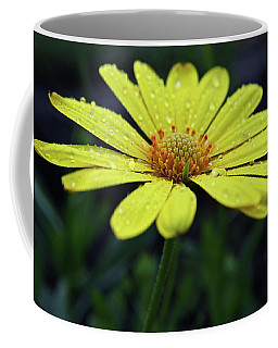 Coffee Mug featuring the photograph Raindrops On Daisy by Judy Vincent