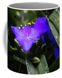 Tradescantia Photographs Coffee Mugs