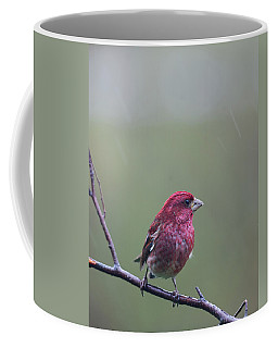 Coffee Mug featuring the photograph Rainy Day Finch by Susan Capuano