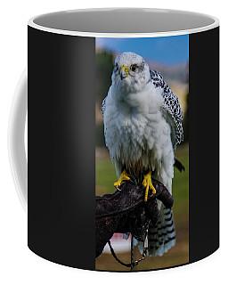 Coffee Mug featuring the photograph Ramona Hawk 1 by Phyllis Spoor