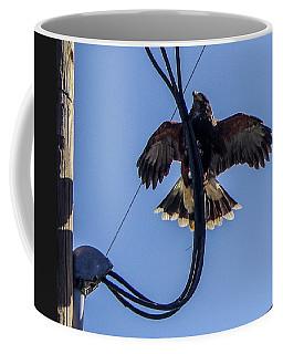 Coffee Mug featuring the photograph Ramona Hawk 5 by Phyllis Spoor