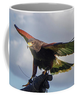 Coffee Mug featuring the photograph Ramona Hawk Watch 3 by Phyllis Spoor