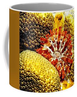Rare Orange Tipped Corallimorph - Fire In The Sea Coffee Mug