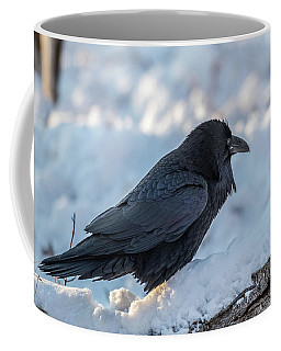 Coffee Mug featuring the photograph Raven by Paul Freidlund