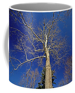 Coffee Mug featuring the photograph Reaching For The Sky by Suzanne Stout