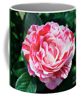 Red And Pink Floral Candy Rose Garden 490 Coffee Mug