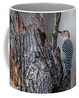 Coffee Mug featuring the photograph Red Bellied Woody by Paul Freidlund