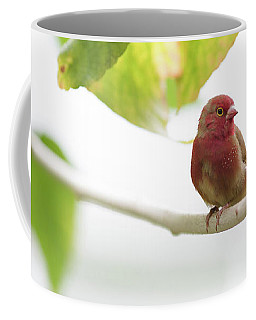Coffee Mug featuring the photograph Red Bird by Raphael Lopez