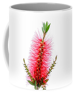 Red Bottle Brush Against An Overcast Sky Coffee Mug