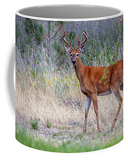 Red Bucks 1 Coffee Mug