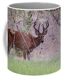 Red Bucks 2 Coffee Mug