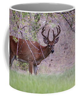 Red Bucks 2 Coffee Mug