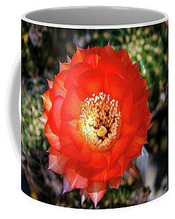 Red Cactus Bloom Coffee Mug