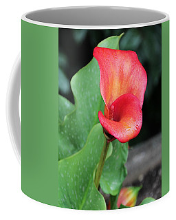 Coffee Mug featuring the photograph Red Calla Lily by Katie Wing Vigil
