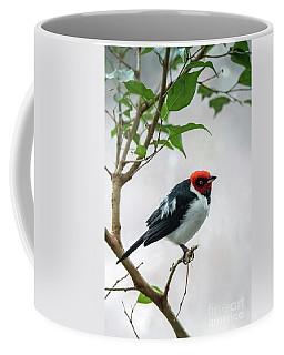 Red Capped Cardinal 2 Coffee Mug
