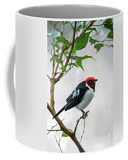 Red Capped Cardinal 2 Coffee Mug