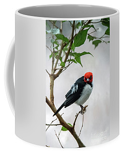 Red Capped Cardinal Coffee Mug