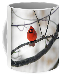 Coffee Mug featuring the photograph Red Cardinal In Snow by Marie Hicks