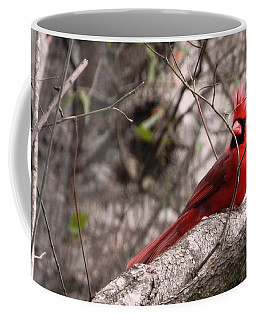 Coffee Mug featuring the photograph Red Cardinal Daddy On Duty by Belinda Lee