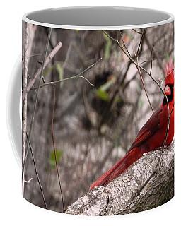 Red Cardinal Daddy On Duty Coffee Mug by Belinda Lee
