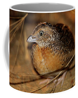 Red-chested Button-quail Coffee Mug