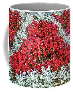 Coffee Mug featuring the photograph Red Coleus And Dusty Miller Plants by Sue Smith