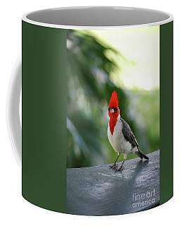 Red Crested Cardinal Bird Standing On A Railing Coffee Mug