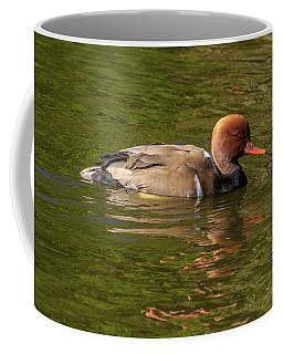 Red-crested Pochard, Netta Rufina Coffee Mug