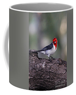 Red Crested Posing Coffee Mug