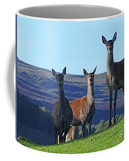 Coffee Mug featuring the photograph Red Deer Hinds  by Phil Banks