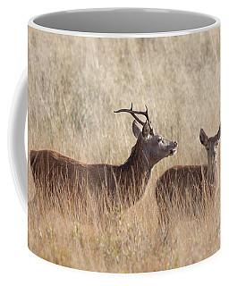 Red Deer Stag And Hind Coffee Mug