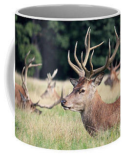Red Deer Stags Richmond Park Coffee Mug