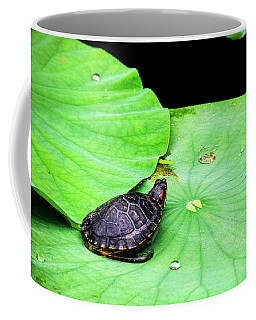 Red-eared Slider Coffee Mug