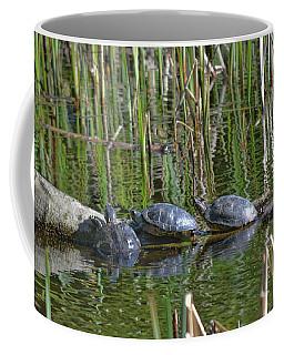 Red Eared Slider Turtles Coffee Mug