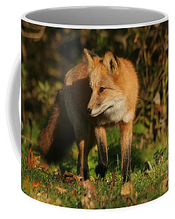 Coffee Mug featuring the photograph Red Fox by Doris Potter